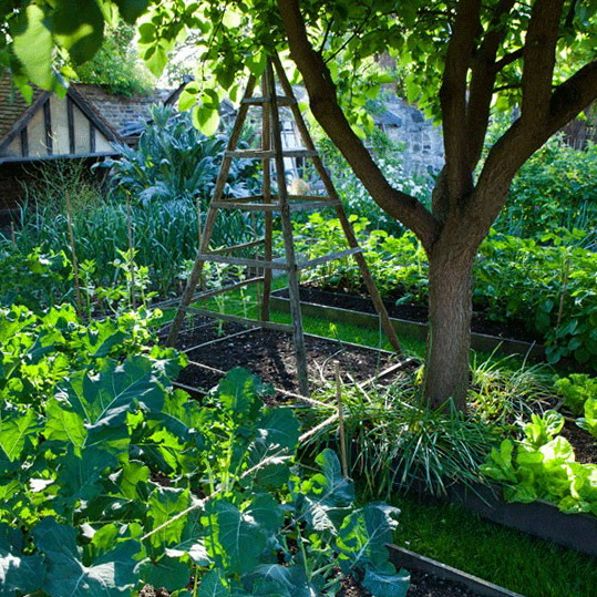 Country Vegetable Garden Ideas ornamental edibles | vegetable garden, gardens and raised bed
