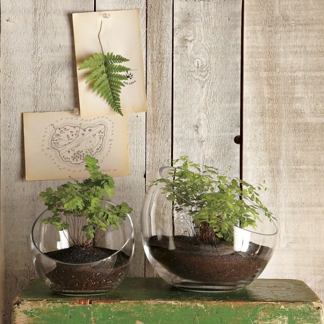 1-green-island-terrariums-cacti