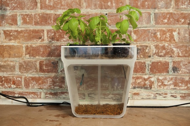 1-home-aquaponics-garden