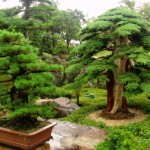 Fashion for bonsai
