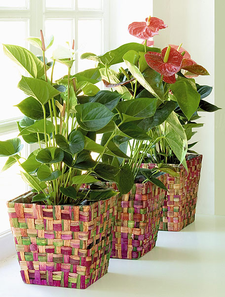 1-arranged-houseplants