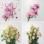 Broken Flowers from John Shiremana