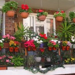 How beautiful options to arrange a balcony with flowers