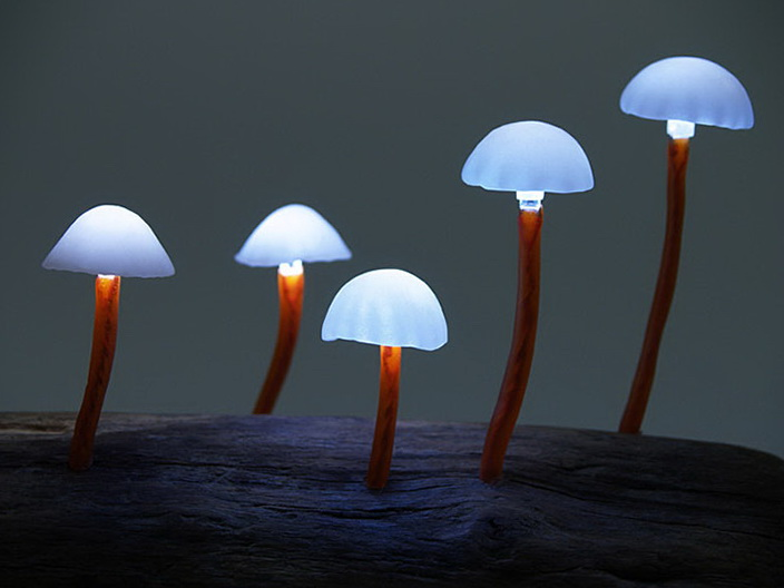 1-blue mushrooms