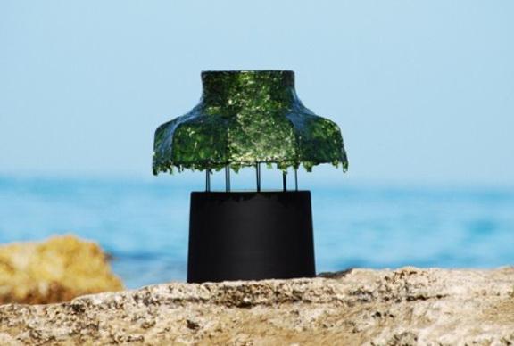 1-interesting-green-light-algae