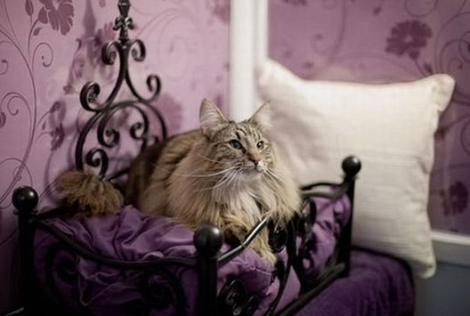 1-cozy-cat-longcroft-hotel-london