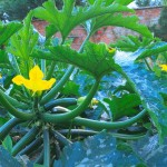 September Ideas for Garden