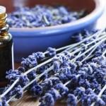 Lavender in your garden
