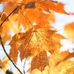 In season: autumn foliage