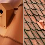Nesting box on the roof of Klaas Kuiken