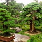 Fashion for bonsai