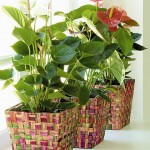 Arranged houseplants