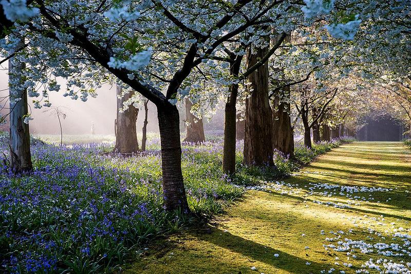 1-flowering-trees