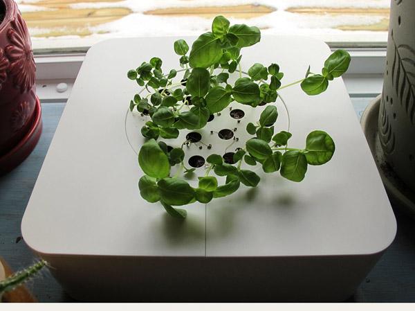 1-plant