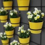Flowers in pots, interesting ideas