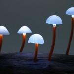 Mushrooms - lights from Yukio Takano