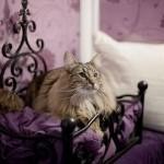Cozy Cat Longcroft Hotel in London