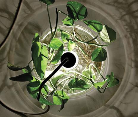 1-original-plant-lamp