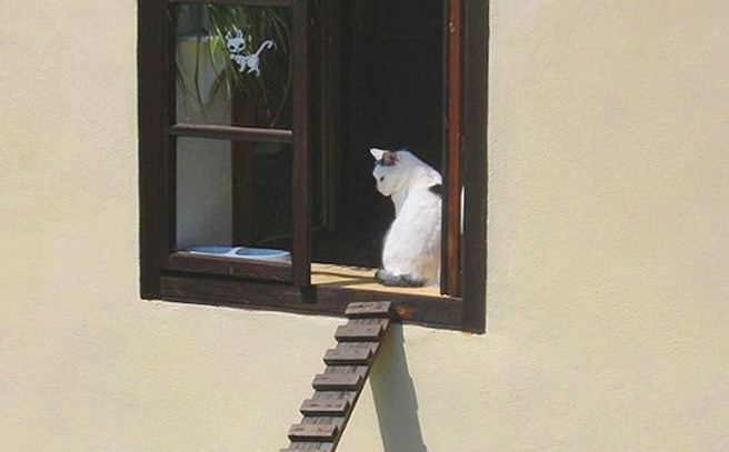 1-stairway-escape-cats