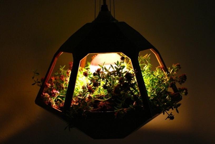 1-beautiful-hanging-terrarium-lamp